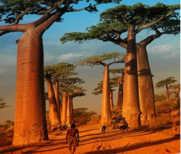 07.12.2017 - Madagaskar - podivuhodná Lemurie / Skuteč