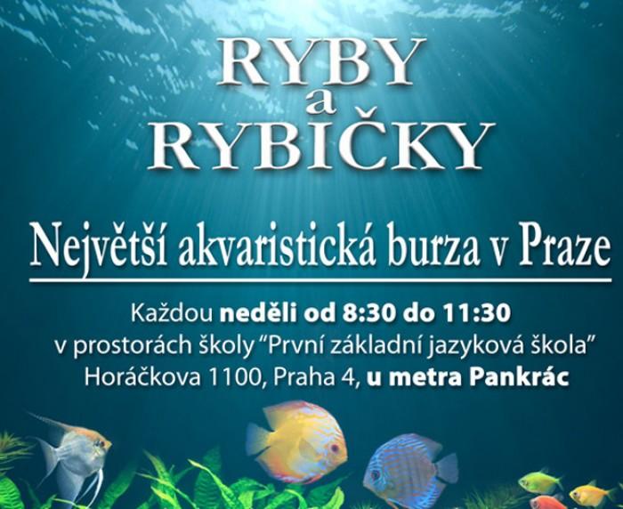 RYBY A RYBIČKY - Největší výstavní a prodejní akvaristická burza v Praze