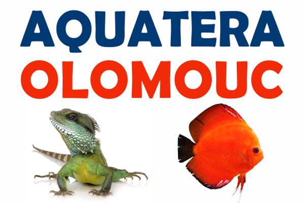 Aquatera 2018 - Olomouc