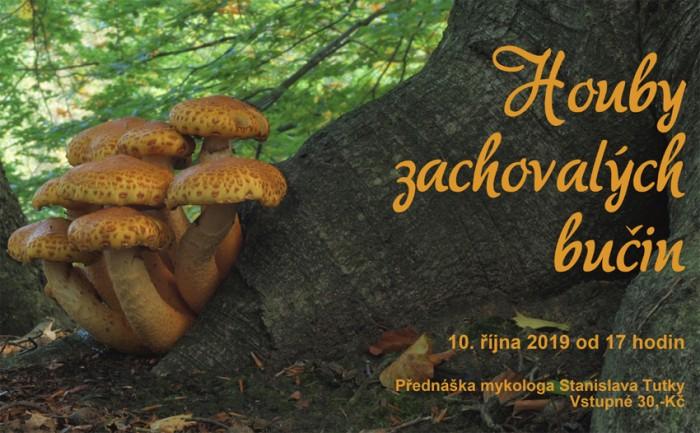 10.10.2019 - Houby zachovaných  bučin - Přednáška / Bělá pod Bezdězem