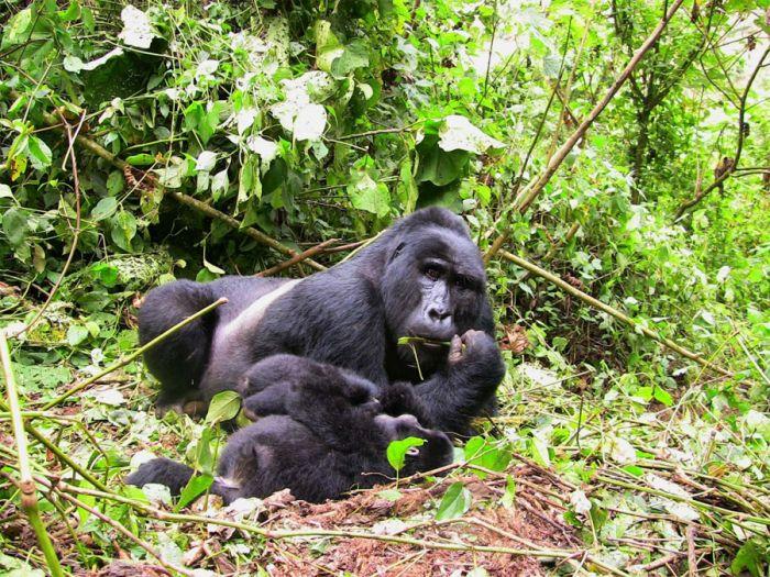 Ugandou (nejen) za horskými gorilami / Lázně Bělohrad