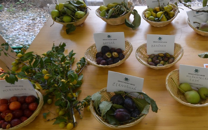 14.08.2020 - Letní hrušně, jabloně a slivoně - Výstava starých odrůd / Praha