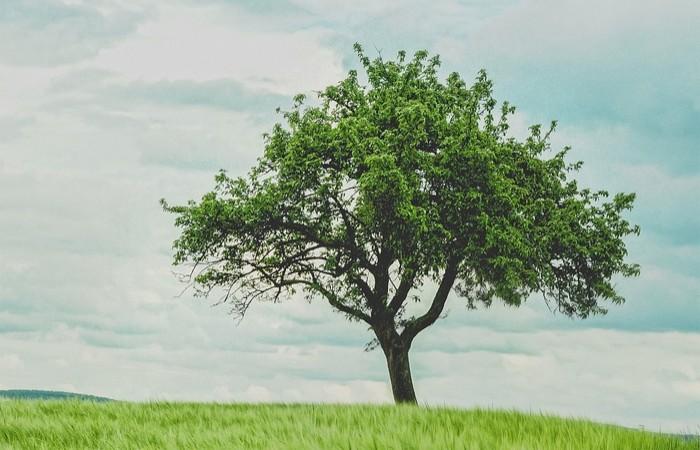 Stromů svobody přibývá. S vysazením 2018 symbolů vzniku Československa může pomoci každý