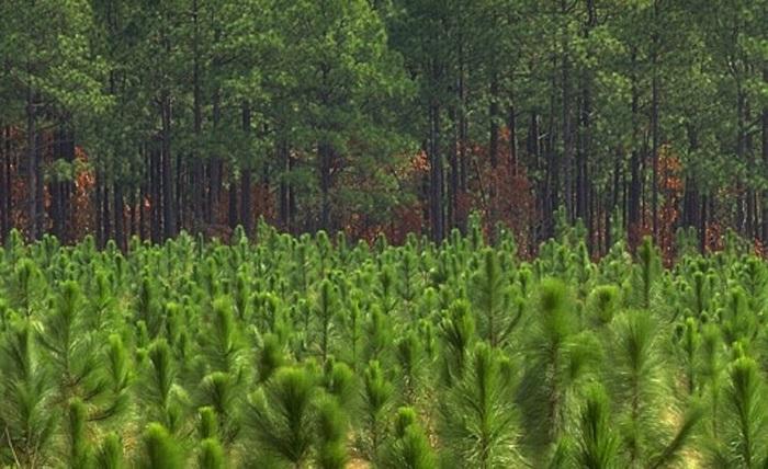 Vlastníci lesa mohou k obnově využít semenný rok