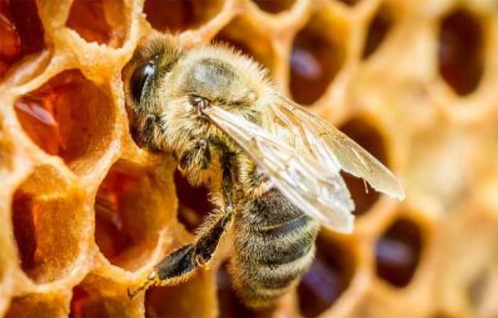 Středočeský kraj podporuje včelaře v boji proti včelímu moru