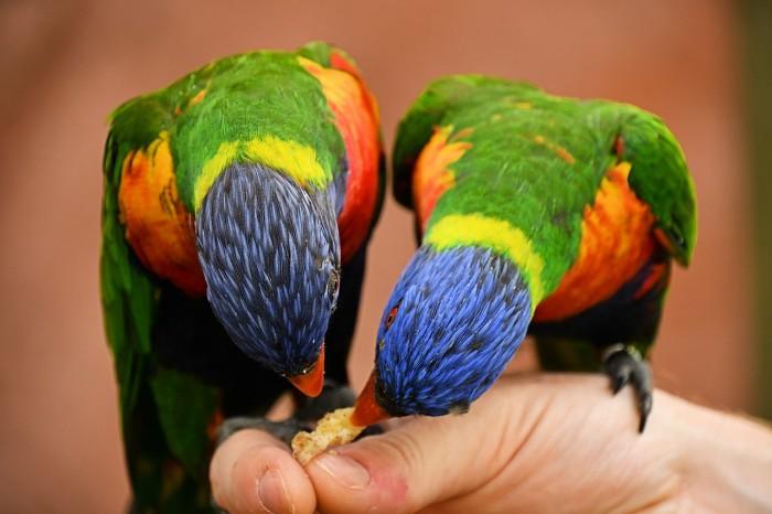 Druhy papoušků, které ochočíte dříve, než řeknete švec