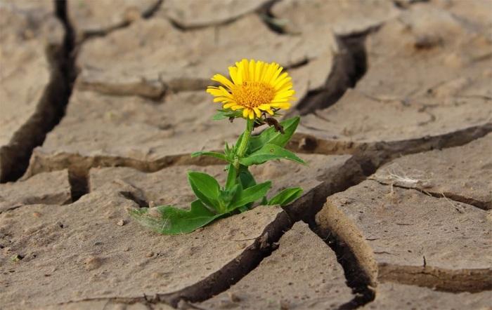 MŽP na boj se suchem ve městech a obcích uvolňuje další miliardu