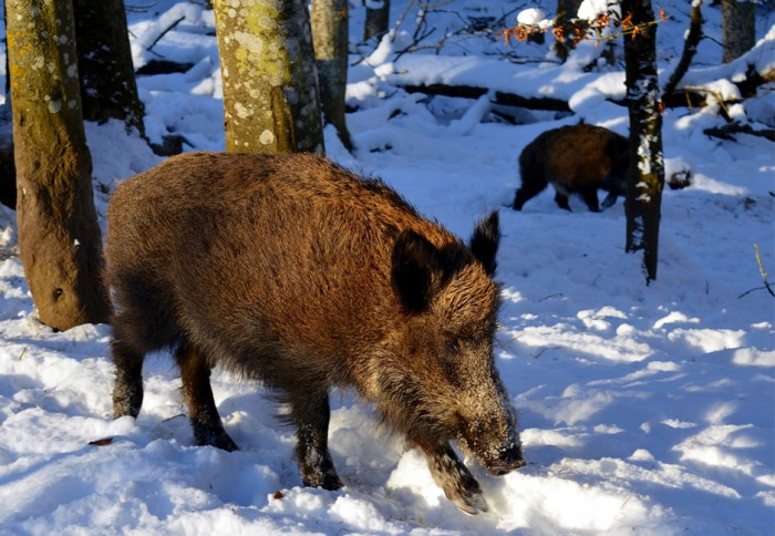 Chystaná novela zákona dá myslivcům nové možnosti, jak snížit počty spárkaté zvěře a ochránit tak lesy