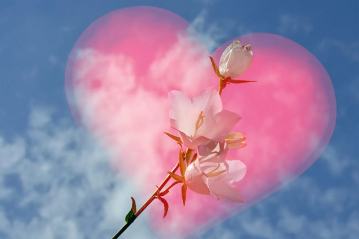 Online prodeje květin na Valentýna stoupají trojnásobně, vyrovnají se Prvnímu máji