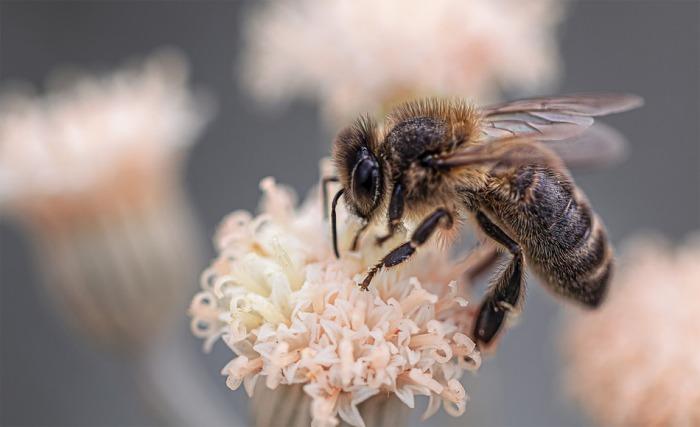 Moravskoslezský kraj pomůže včelařům. Přispěje i na včelařský veletrh
