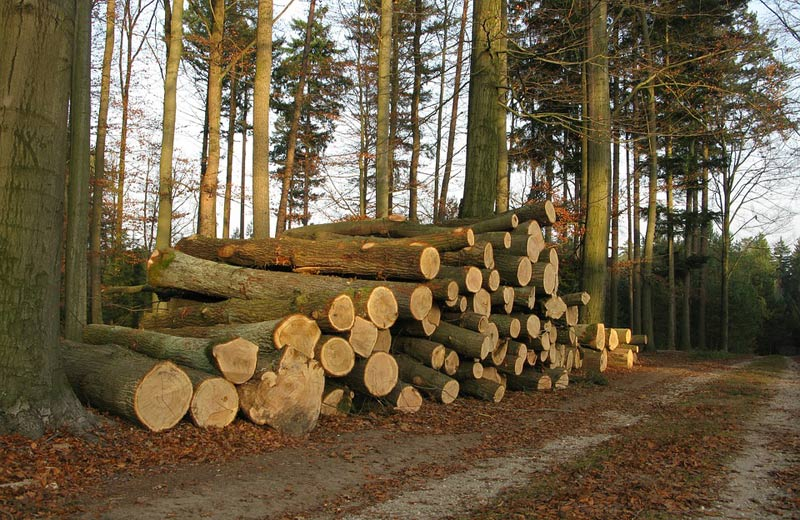 Základní strategie lesnictví bude reagovat na aktuální stav v lesích
