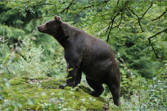 Zlínský kraj proplatí škody způsobené chráněnými živočichy