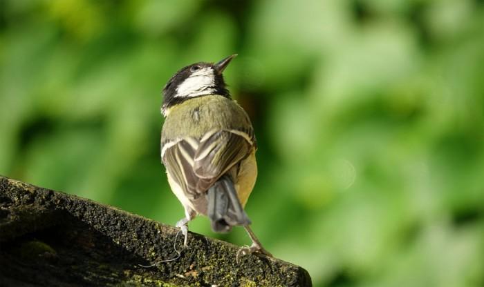 Ornitologové vyhodnotili sčítání ptáků na krmítkách. Skokanem roku je sojka, první místo obhájila koňadra