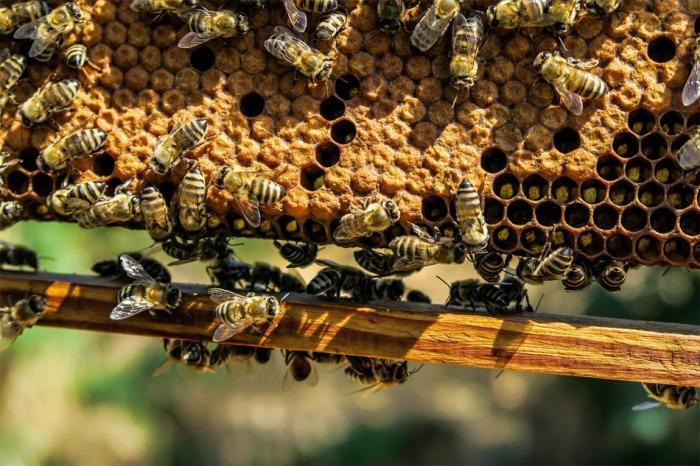 Do půlky dubna musí včelaři se zvýšeným výskytem původce varroázy ošetřit svá včelstva