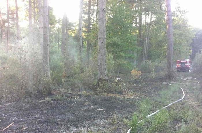 Po��r lesa v �eperce likvidovalo �est jednotek hasi��