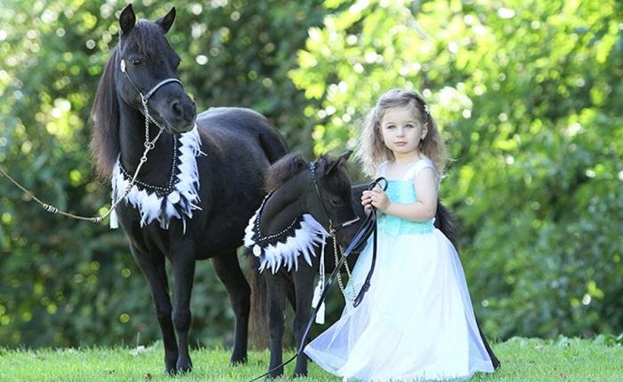 Miniaturní koně: Noví obyvatelé parku Boheminium v Mariánských Lázních