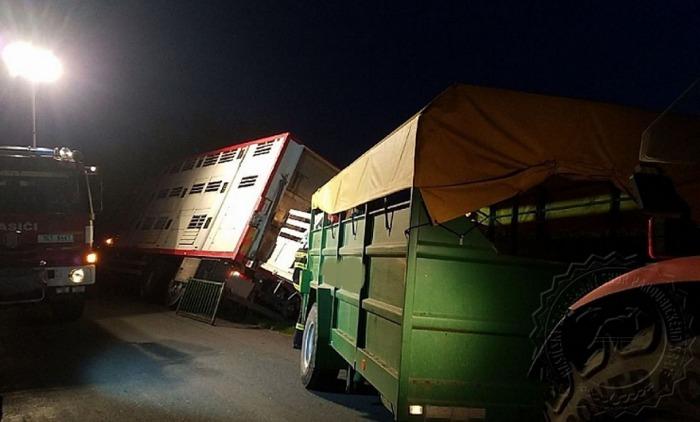 Hasiči museli přeložit 18 kusů prasat, nákladnímu vozidlu hrozilo převrácení
