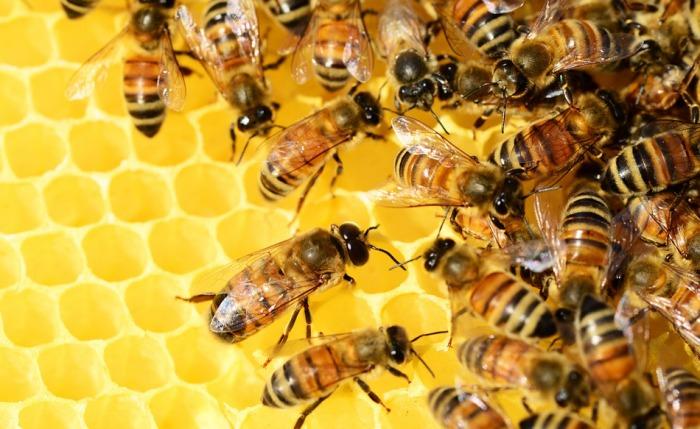 Česko má v EU nejvíce včelařů v poměru k obyvatelstvu, ti za jedno z největších rizik považují pesticidy