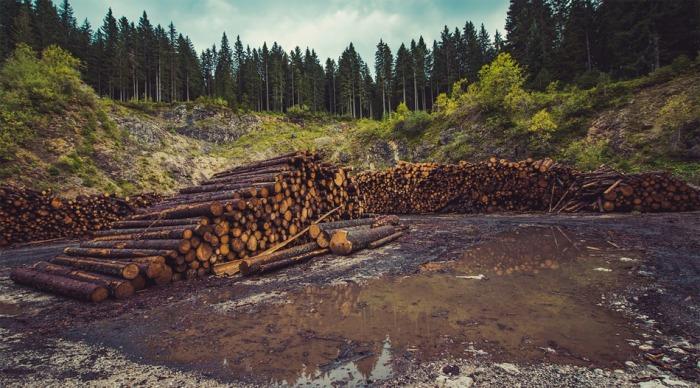 Lesnické firmy soutěží o zpracování šesti milionů krychlových metrů dřeva