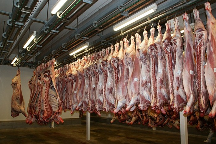 Vývoz živočišných produktů navzdory pandemii COVID-19 roste