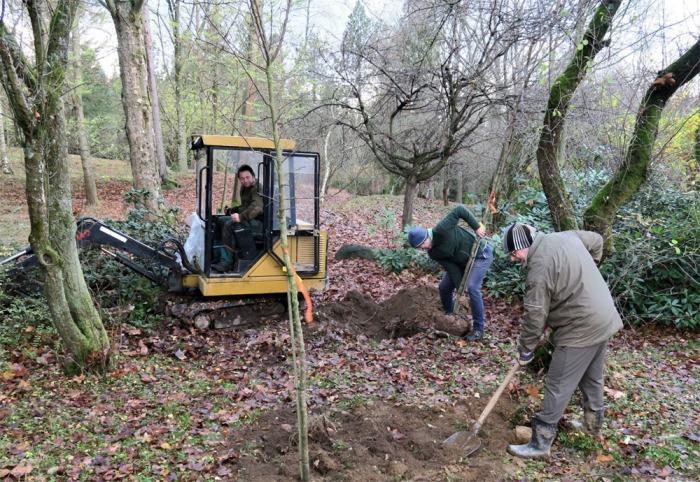 Díky Nadaci ČEZ zakořeňuje ve šluknovském školním arboretu 77 nových stromů