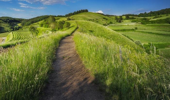 Státní zemědělský fond prostřednictvím dotací na Ošetřování trvalých travních porostů rozdělí 2,74 miliardy korun