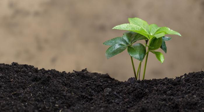 Nový akční plán ekologického zemědělství přispěje kcíli dosáhnout 25% ekologické půdy vEU do roku 2030