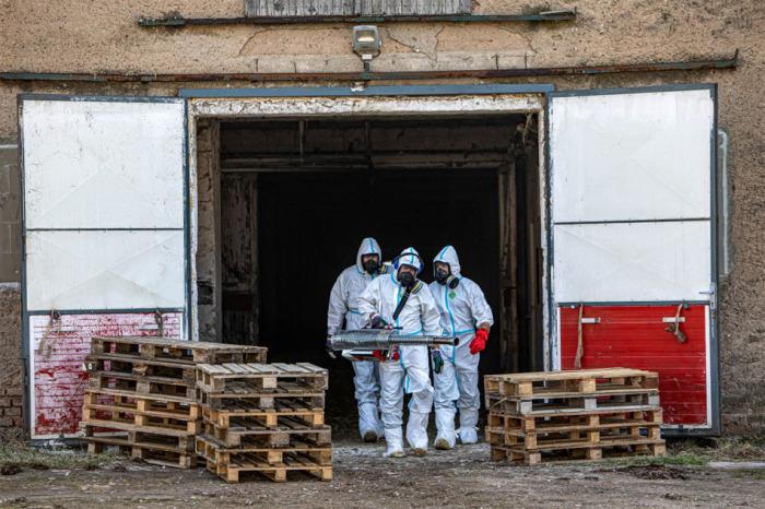 Ptačí chřipka se rozšířila do dalších dvou chovů kachen na Královéhradecku