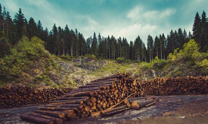Městu Havlíčkův Brod byla udělena pokuta za včasné nezpracování a neasanování stromů, napadených kůrovci