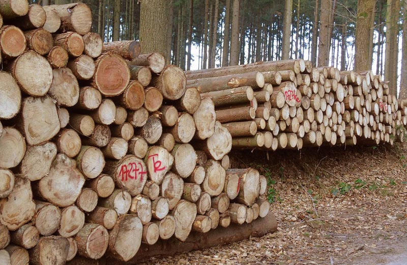 Lesy ČR loni hospodařily v kladných číslech