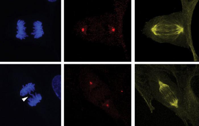 Dosud neznámý protein by mohl pomoci v protinádorové léčbě