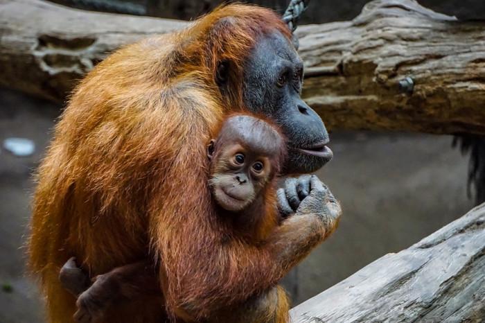 Zoo Praha po dlouhých měsících opět otevřela pavilony, návštěvníky čekají i komentovaná krmení