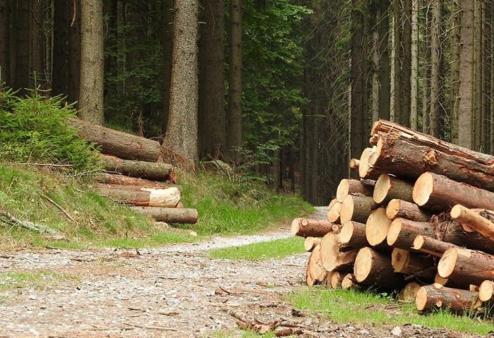 Lesy ČR darují lidem postiženým tornádem dřevo na nový krov nebo sto tisíc korun