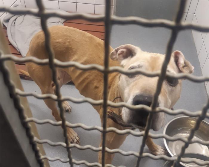 Z týrání zvířat je obviněn 33letý muž, který nechal psa týdny zavřeného v bytě