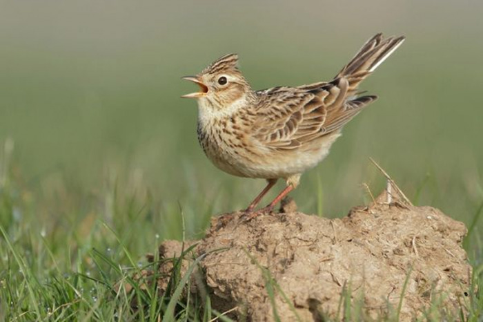 Ptákům i zajícům se lépe daří v menších polích. Česká to nejsou
