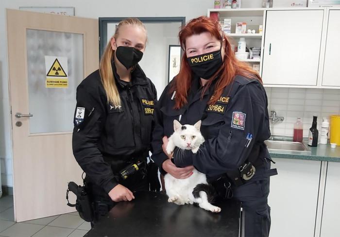 Obvinění z týrání zvířat hrozí neznámému pachateli, který uvěznil kocoura v pytli a položil ho na silnici
