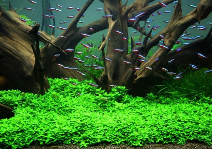 Rostlinné akvárium aneb jak ho založit