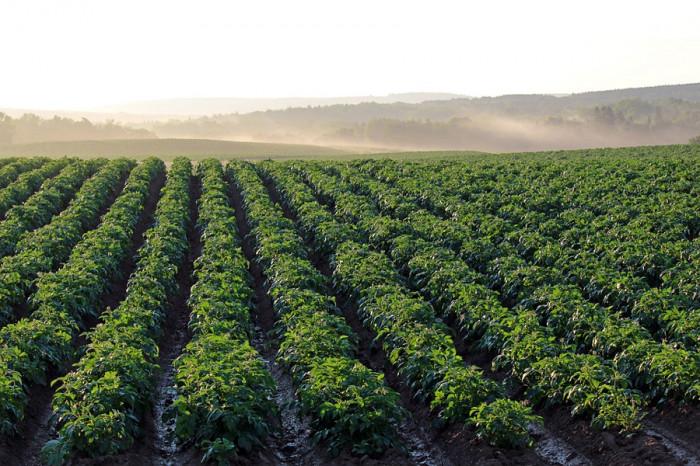 Ministr zemědělství schválil sazby přímých plateb pro rok 2021