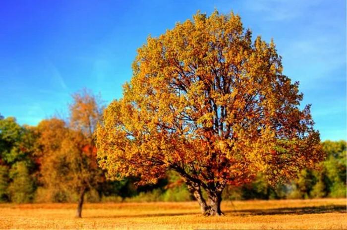 Užijte si barvy podzimu v Mariánských Lázních
