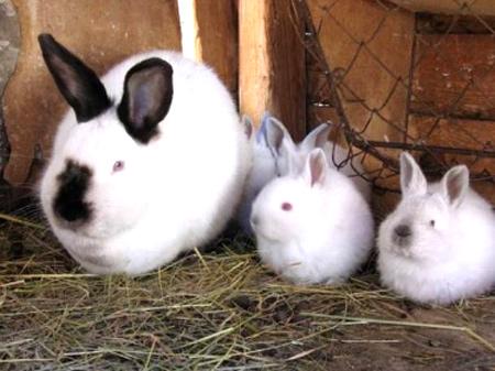 Z králíkárny zmizeli králíci